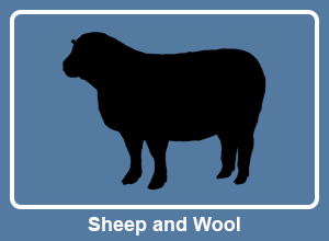 Sheep and Wool